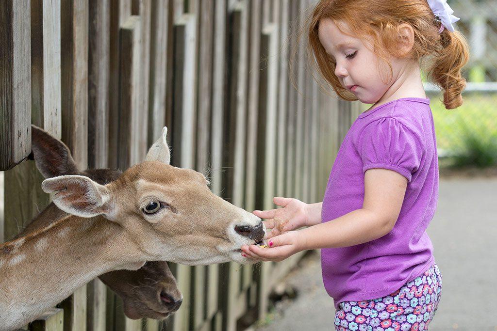 Tweetsie Railroad Deer Park Petting Zoo