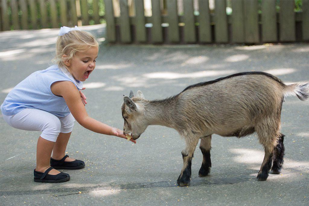 Tweetsie Railroad-petting zoo