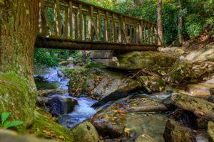 Beech mountain hikes